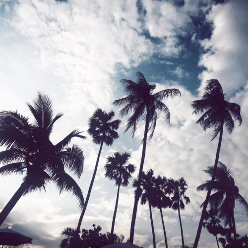 paradise kohsamui palmtrees fashionbloggerde germanblogger bloggerde