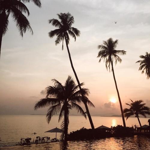 sunrise paradise   kohsamui palmtrees sunrise fashionbloggerde germanblogger thailandhellip