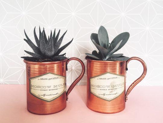 succulents_mugs