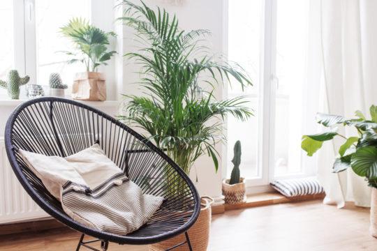 Xoyox.net | Living Wohnzimmer Altbau Room