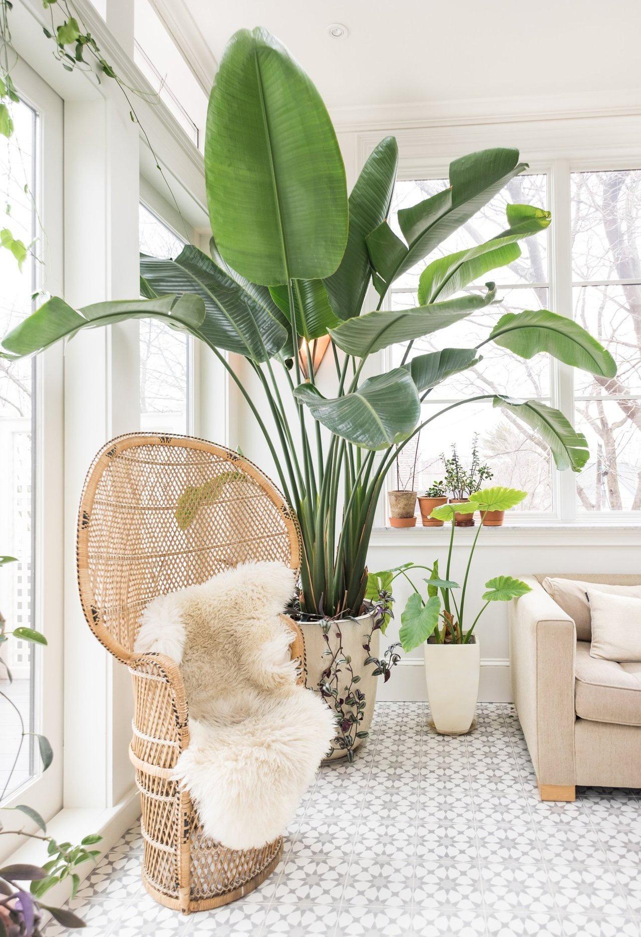 5 pflegeleichte zimmerpflanzen f r euer zuhause for Dekorative zimmerpflanzen