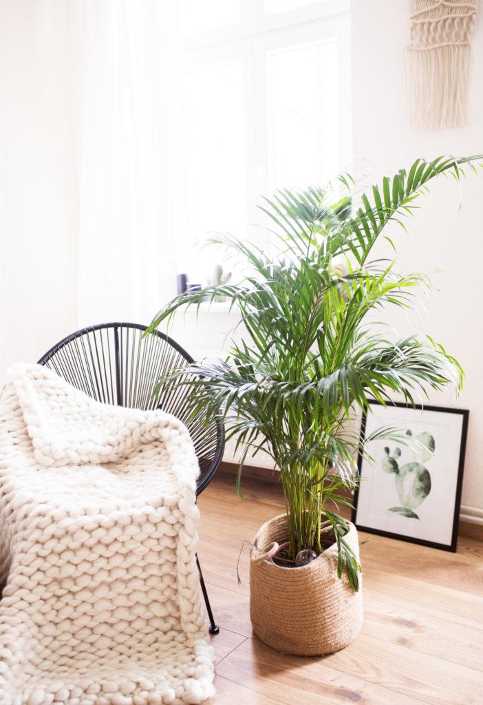 5 pflegeleichte zimmerpflanzen f r euer zuhause. Black Bedroom Furniture Sets. Home Design Ideas